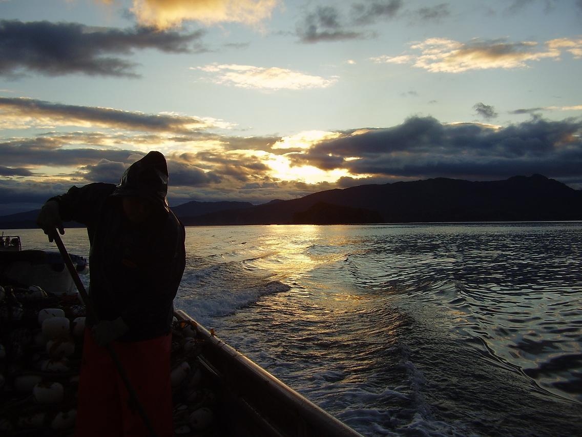 Alaska deadliest catch ak fish counts for Alaska fish counts