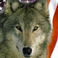 Southern Wolf's picture